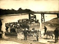 Cattle loading c1926