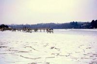 Creek frozen at Fishbourne 1963 [Ivor White]